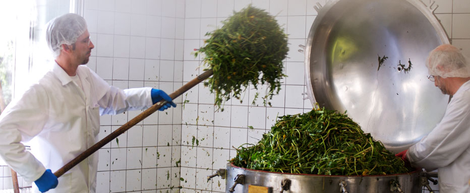 Hand Picked: The herbs are packed into a steinless steel cauldron