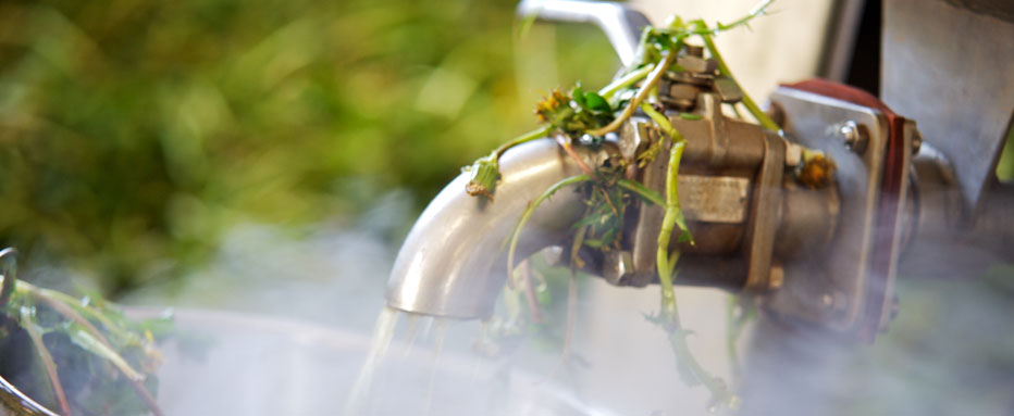 Short Steaming: The herbs are steamed shortly in order to enable the plant cells to open up
